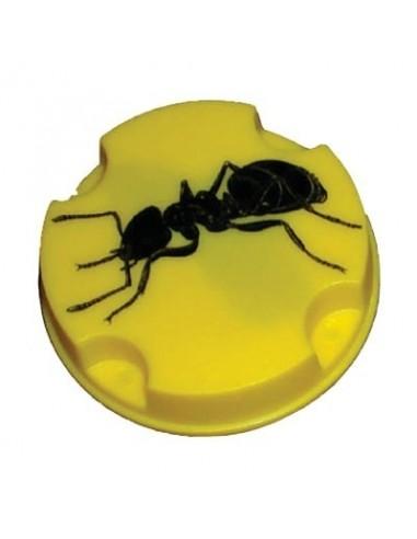anti fourmis bo te vg bo te de 10 g. Black Bedroom Furniture Sets. Home Design Ideas